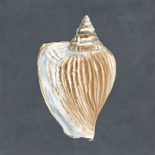 Shell on Slate VI Digital Print by Meagher, Megan,Decorative