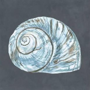 Shell on Slate VIII Digital Print by Meagher, Megan,Decorative