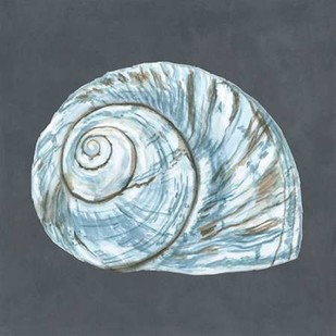 Shell on Slate VIII Digital Print by Meagher, Megan,Decorative