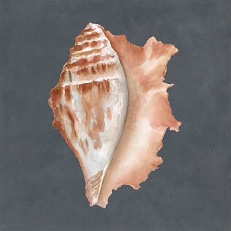Shell on Slate IX Digital Print by Meagher, Megan,Decorative