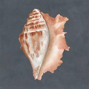 Shell on Slate IX Digital Print by Meagher, Megan,Decorative