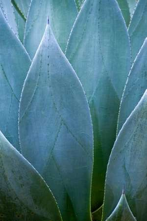 Agave V Digital Print by Schrack, Thea,Realism
