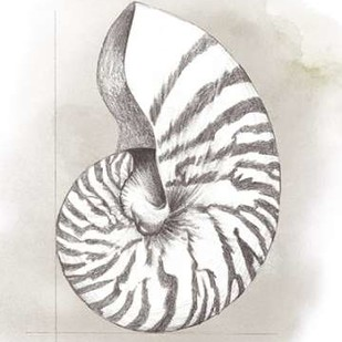 Shell Diagram III Digital Print by Popp, Grace,Decorative