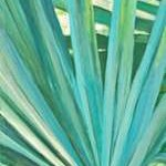 Fan Palm I Digital Print by Wilkins, Suzanne,Impressionism