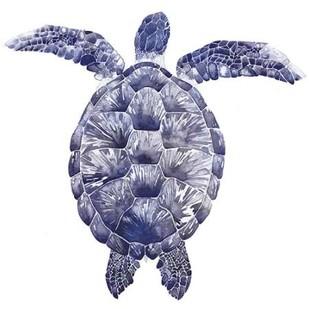 Marine Turtle I Digital Print by Popp, Grace,Decorative