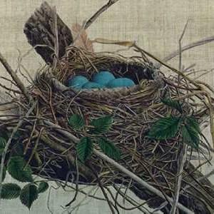 Nesting II Digital Print by Butler, John,Realism
