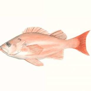 Watercolor Deep Sea Fish I Digital Print by McCavitt, Naomi,Decorative