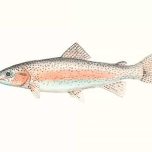 Watercolor Deep Sea Fish II Digital Print by McCavitt, Naomi,Decorative