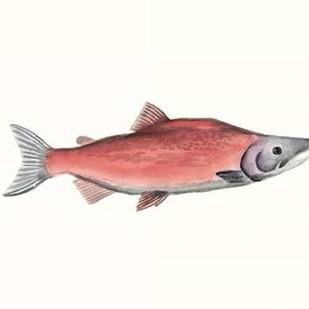 Watercolor Deep Sea Fish III Digital Print by McCavitt, Naomi,Decorative