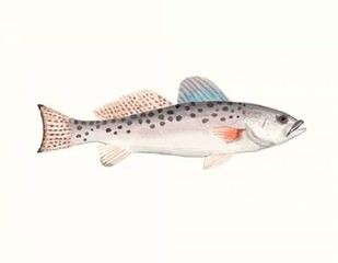 Watercolor Deep Sea Fish IV Digital Print by McCavitt, Naomi,Decorative