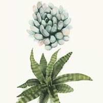 Row of Succulents II Digital Print by Popp, Grace,Decorative