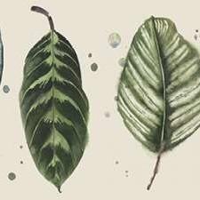 Palm Line-Up II Digital Print by Popp, Grace,Realism, Realism