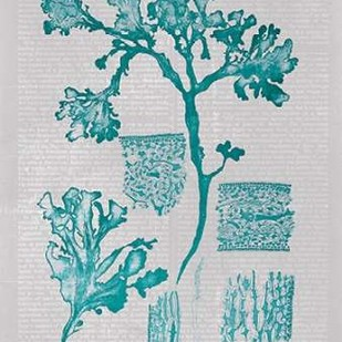 Teal Coral I Digital Print by Goldberger, Jennifer,Decorative