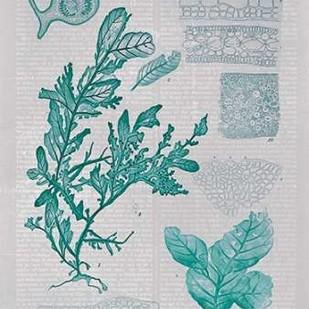 Teal Coral II Digital Print by Goldberger, Jennifer,Decorative