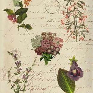 Postscript Flower Chart I Digital Print by Goldberger, Jennifer,Decorative