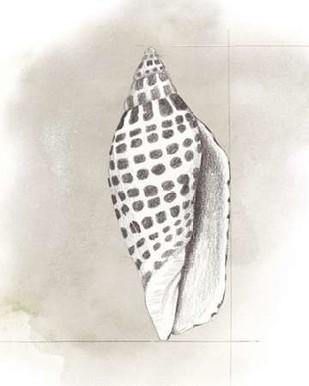 Shell Diagram IV Digital Print by Popp, Grace,Decorative