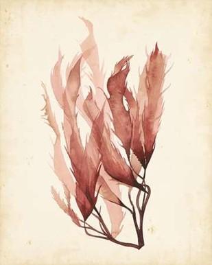 Watercolor Sea Grass IV Print By Popp, Grace