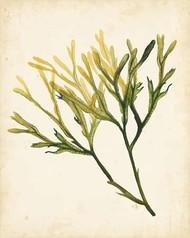 Watercolor Sea Grass V Digital Print by Popp, Grace,Impressionism