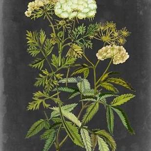 Bookplate Floral I Digital Print by McCavitt, Naomi,Decorative