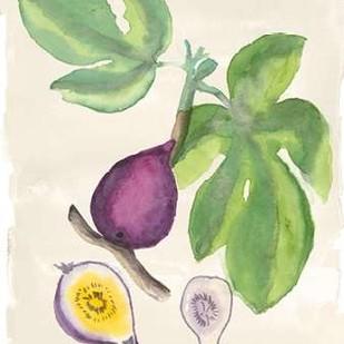 Watercolor Fruit I Digital Print by McCavitt, Naomi,Decorative