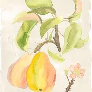 Watercolor Fruit III Digital Print by McCavitt, Naomi,Decorative