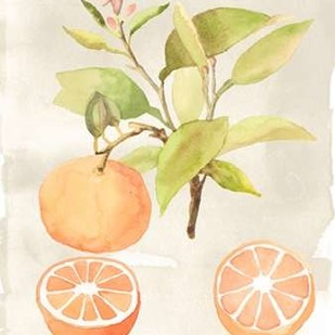 Watercolor Fruit V Digital Print by McCavitt, Naomi,Decorative