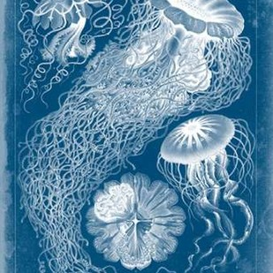 Marine Blueprint II Digital Print by Vision Studio,Decorative