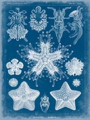 Marine Blueprint III Digital Print by Vision Studio,Decorative