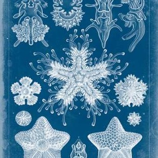 Marine Blueprint III Digital Print by Vision Studio,Decorative