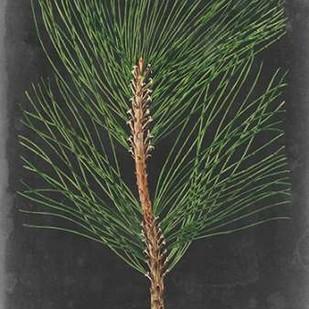 Dramatic Pine I Digital Print by Vision Studio,Impressionism