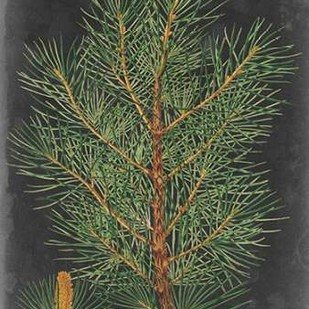 Dramatic Pine II Digital Print by Vision Studio,Impressionism