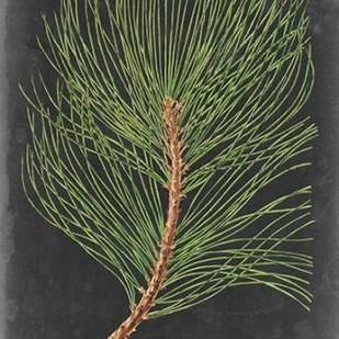 Dramatic Pine III Digital Print by Vision Studio,Impressionism