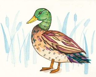Wetland Mallard I Digital Print by Ewer, Rebekah,Decorative