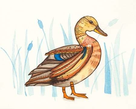 Wetland Mallard II Digital Print by Ewer, Rebekah,Decorative