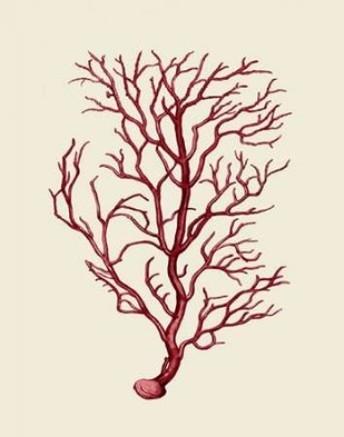 Corals Coral On Cream b Digital Print by Fab Funky,Decorative