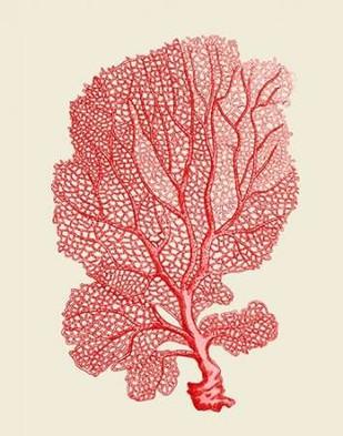 Red Corals 1 b Digital Print by Fab Funky,Decorative