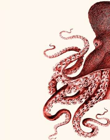Octopus Coral And Cream A Digital Print By Fab Funky,Decorative Pictures Gallery