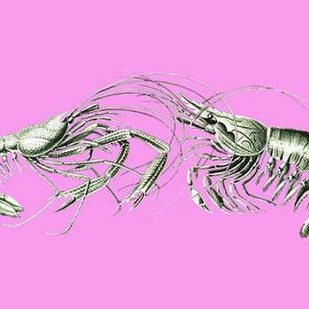 Shrimps On Pink Digital Print by Fab Funky,Decorative