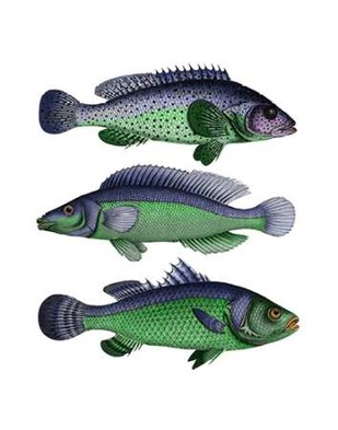 Blue and Green Fish Trio Digital Print by Fab Funky,Decorative