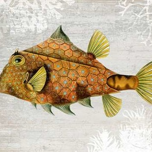 Gold Turret Fish Digital Print by Fab Funky,Realism