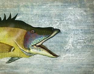Hog Fish print on nautical map image Digital Print by Fab Funky,Realism