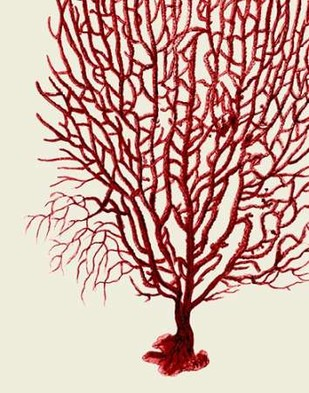 Red Corals 2 b Digital Print by Fab Funky,Illustration