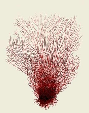 Red Corals 2 d Digital Print by Fab Funky,Illustration