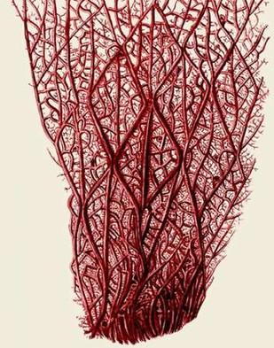 Red Corals 2 f Digital Print by Fab Funky,Illustration
