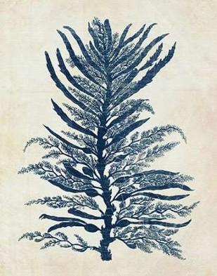Indigo Blue Seaweed 1 b Digital Print by Fab Funky,Illustration