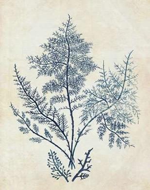 Indigo Blue Seaweed 1 d Digital Print by Fab Funky,Decorative