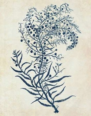Indigo Blue Seaweed 3 c Digital Print by Fab Funky,Illustration