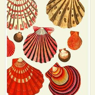 Red and Cream Clam Shells Digital Print by Fab Funky,Decorative