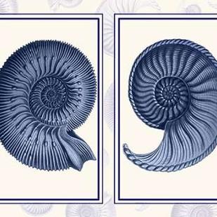 Nautilus Shells Indigo Blue Digital Print by Fab Funky,Decorative