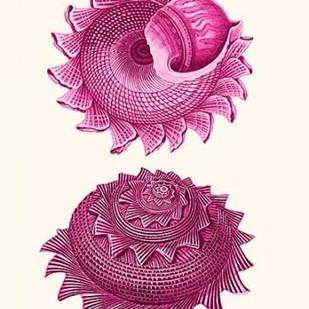 Pink Shells b Digital Print by Fab Funky,Decorative